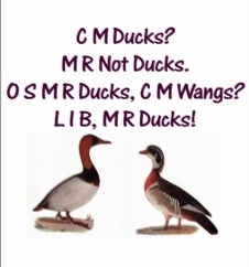 accent ducks