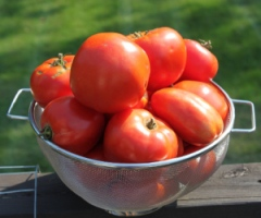 Whether fresh or canned - we use tomatoes from our garden nearly every day of the year.